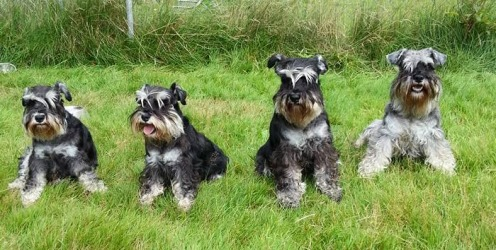 4 hunder