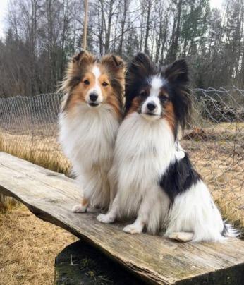 Thundra og Pito