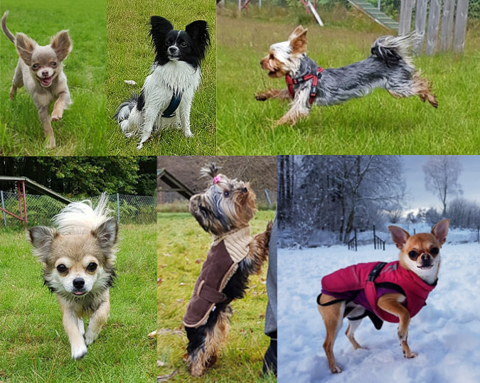 miniatyrhunder1serie-1